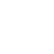 New Light Studio Roma